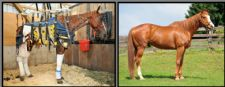 Meet Our Clients: Days End Farm Horse Rescue